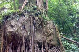 莫里热带雨林