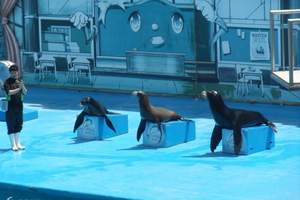 青岛哪些景点适合小孩玩?青岛极地海洋世界门票   团购