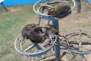 威海神雕山野生动物自然保护区