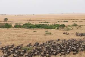 深圳广州出发到非洲肯尼亚旅游 非洲肯尼亚动物王国八天猎奇之行