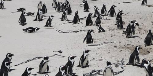 企鹅生态保护区