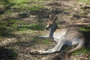 南昌到澳大利亚悉尼、墨尔本、黄金海岸、新西兰双飞十二日游