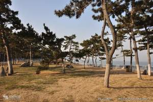 暑假去大连五日游 青岛到崂山、烟台威海蓬莱、大连四晚五天游