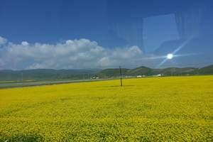 周末游:青海西宁/青海湖/茶卡盐湖/高原野生动物园三日游