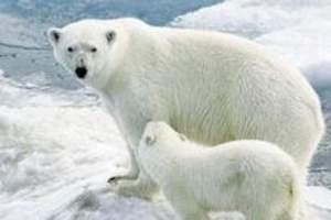 天津极地海洋旅游_天津极地_海洋馆一日游