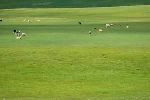 夏季北京到呼市旅行团线路 希拉穆仁草原、银肯响沙湾双卧五日