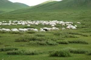 散客天天接九草原--成吉思汗陵-沙漠民族风情三日游宿豪华包