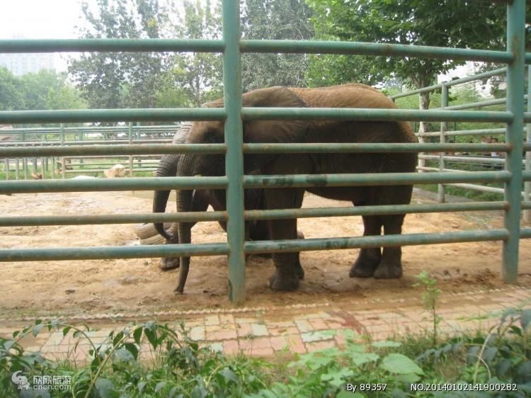 郑州动物园_郑州动物园风景图片