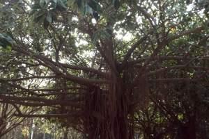 深圳红树林自然保护区