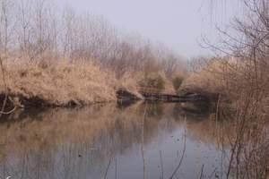 花海泰州| 荷兰花海 李中水上森林 西溪古街二日大巴