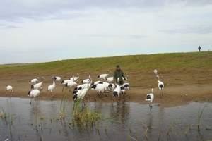 哈尔滨到五大连池、齐齐哈尔、扎龙自然保护区三日游/丹顶鹤故乡