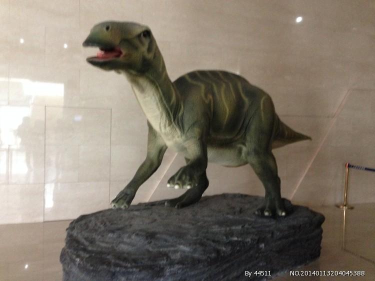 内蒙古博物馆收藏的古生物化石汇集了内蒙古的化石图片