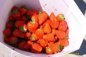 大连草莓采摘_绿色无污染草莓采摘、西山湖踏青一日游