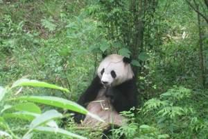 成都去广汉三星堆 大熊猫基地一日游报价 四川哪些地方有大熊猫