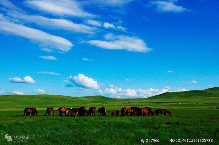 (限时特价)内蒙古大草原|希拉穆仁草原休闲二日游|赠送手扒肉