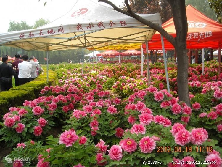 洛阳中国国花园门票
