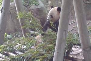 重庆野生动物世界_乐和乐都娱乐天堂双园二日游