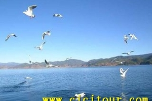 【青海骑行】青海湖、茶卡盐湖、塔尔寺、金银滩 青海双飞5日游