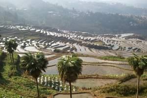 昆明出发到建水、元阳梯田、土林、东川红土地6天5晚游