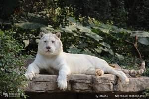 重庆-永川-野生动物园一日游