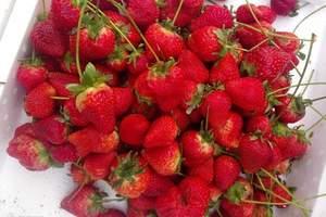 合肥到长丰摘草莓 长丰摘草莓一日游