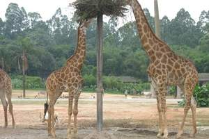 惠州到广州长隆一日游_番禺香江野生动物园