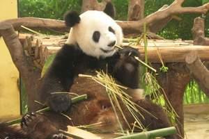 威海西霞口野生动物园一日游 烟台亲子游旅游线路