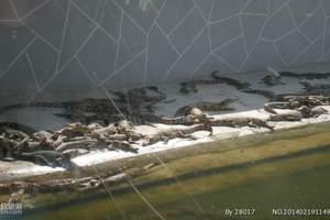 番禺亲子游线路 广州周边亲子游 番禺鳄鱼公园一天游