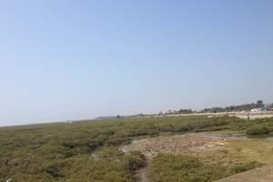 北海金海湾红树林