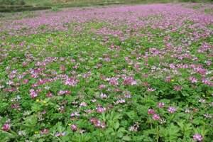 深入花朵的內心時你會瞥見大地的靈魂-星空莊園一日:花兒朵朵