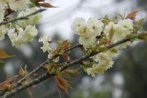 香草世界一天游 花都圆玄道观、香草世界一天