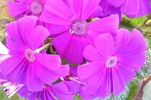 顺义郁金香鲜花节赏花、采摘草莓、七彩蝶园赏蝶亲子一日游