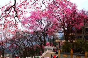 成都去药王谷 李白纪念馆看辛夷花2日游路线攻略 药王谷好玩吗