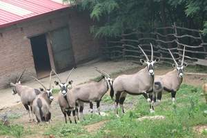 济南章丘野生动物园