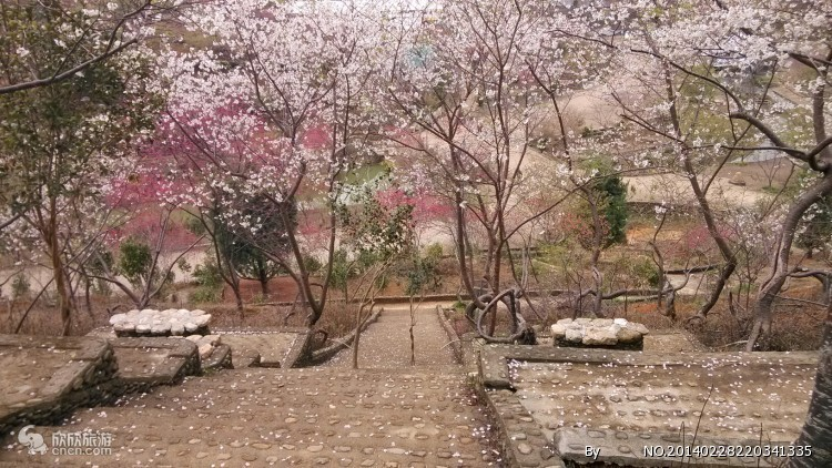 青白江樱花节|成都周边樱花旅游【龙潭水乡