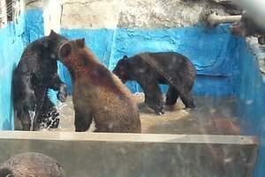 沈阳棋盘山冰川动物园自驾票|动物园优惠票60