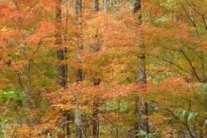红叶谷+长白山(赏红叶、观天池)/长春到红叶谷+长白山3日游