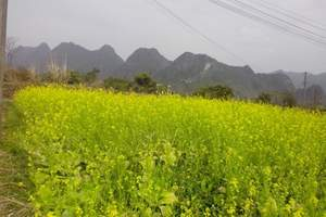 武汉出发周末一天踏青好去处 油菜花+九真山一日游