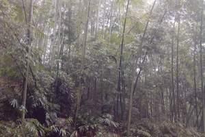 重庆旅游线路-西部大峡谷、蜀南竹海、兴文石林三日游