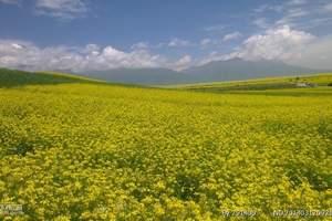青海湖/察尔汗盐湖/格尔木/昆仑山/可可西里/鸟岛8日游