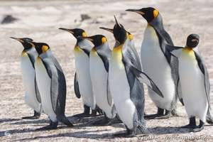【圆梦南美】纯美南极+阿根廷布宜诺斯艾利斯 14晚17天游