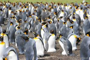【北京到南极奇迹18天旅游】南极阿根廷、伊瓜苏瀑布亚特兰蒂号