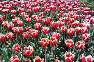 株洲到长沙植物园赏花一日游