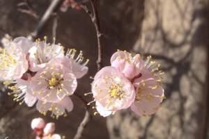 原始森林、天然植物园 石家庄到灵寿 秋山自然生态山水一日游
