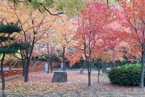 淄博赴日本本州赏樱豪华6日 淄博去日本本州樱花之旅六日游