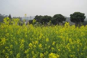 花都王子山森林公园、红山村一天游|广州最美丽的乡村