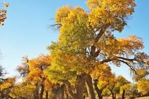 【国庆节额济纳旗旅游】到金色胡杨林、黑水城、怪树林汽车四日游