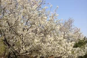 从南昌出发到武汉旅游报价丨南昌到武汉赏樱花、欢乐谷二日游