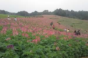 成都周边赏花的地方有哪些_蒲江石象湖赏郁金香一日游