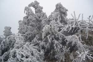 冬季雾凇美景_长白山魔界风景区门票